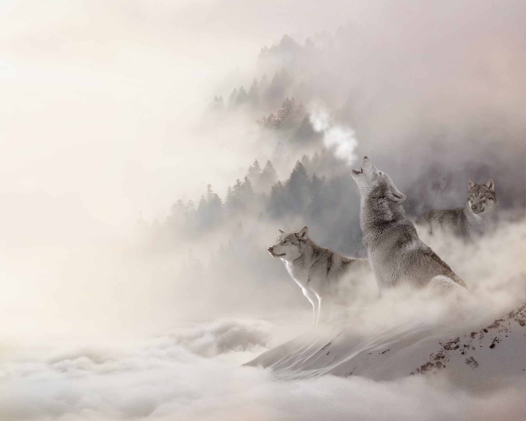 Alana Lee Photography: wolves after adding a sky overlay in photoshop