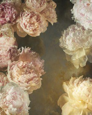 vintage painterly style botanical background image of peony flowers