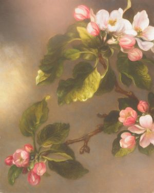 a close up of apple blossoms used on a digital photography background