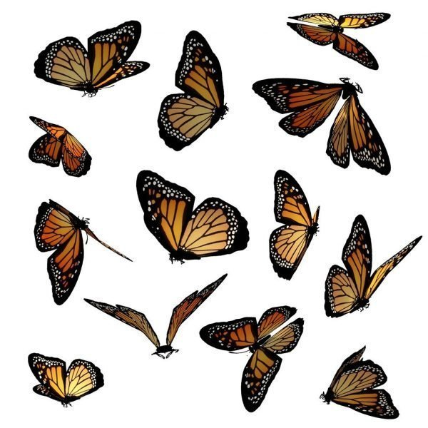 monarch butterfly overlay for photoshop
