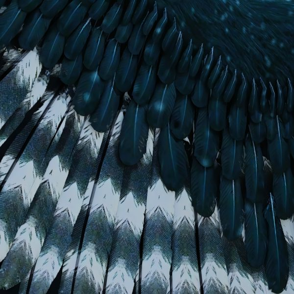 detail of high resolution feather wing overlays with transparent backgrounds for photoshop