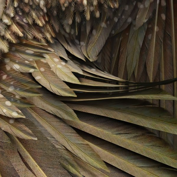 detail of high resolution brown eagle wing overlays with transparent backgrounds for photoshop