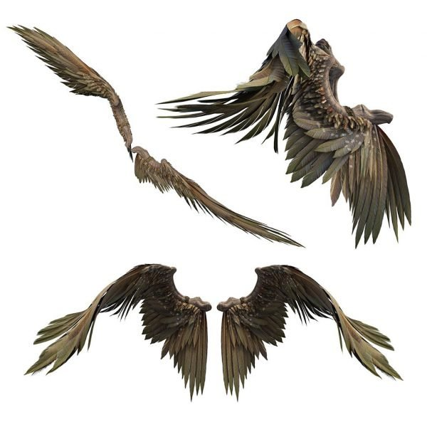 brown eagle wing overlays with transparent backgrounds for photoshop