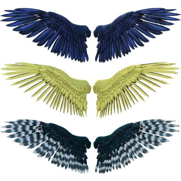 feather wing overlays with transparent backgrounds for photoshop