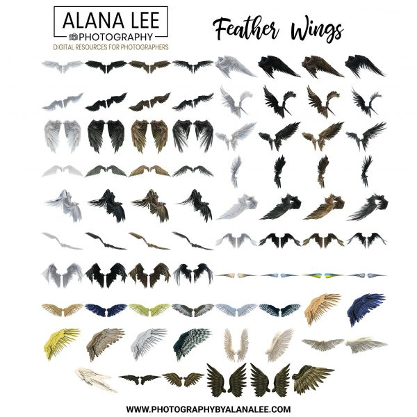 a collection of digital feather wing overlays with transparent backgrounds for photoshop editing