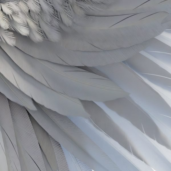 detail of high resolution white angel wing overlays for photoshop