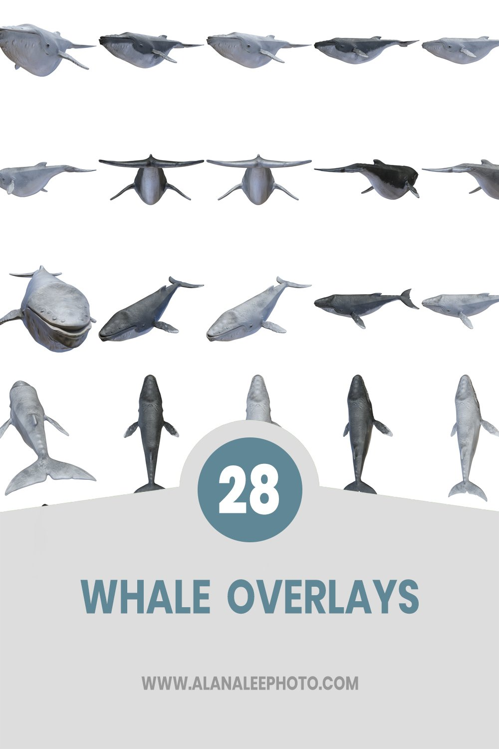 whale overlays with transparent backgrounds for photoshop and digital art