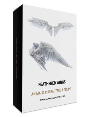 white, black and brown feather wing overlays, angel wings and black raven or crow wings for photoshop