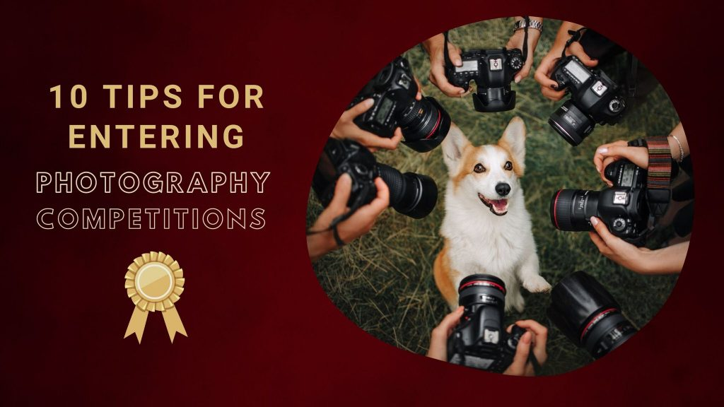 image of cute dog having photo taken in blog post about entering photography contests